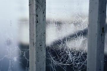Spider web between poles
